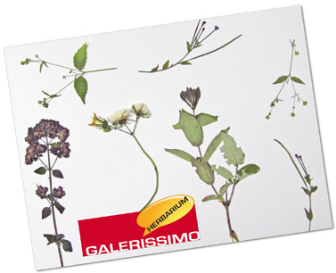 schl selanh nger herbarium getrocknete pflanzen als. Black Bedroom Furniture Sets. Home Design Ideas